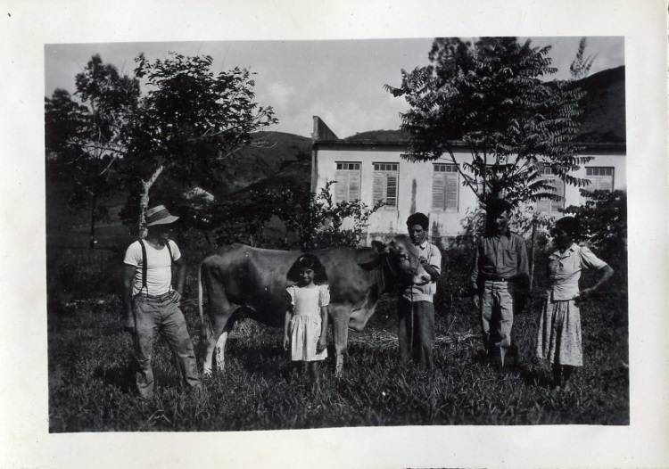 Puerto Rican family receives a heifer. 1944.