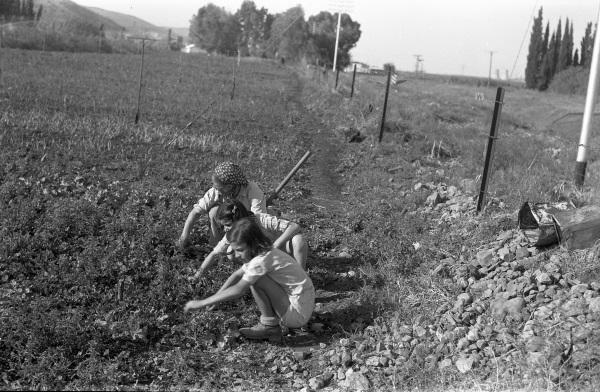 Girls at work at Kibbutz