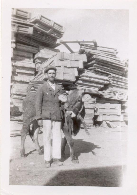First heifer to Greece.