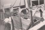 Loading heifers, 1946