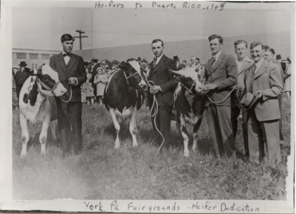 Heifers ready for a May 1945 shipment to Puerto Rico are dedicated at the York Fairgrounds in Pennsylvania. Photo courtesy of Bill Beck.