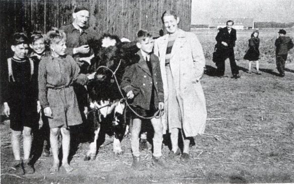 A refugee family with their new heifer at the Coesfeld distribution, Sept. 8, 1950. Photo courtesy of Muriel Elshoff.